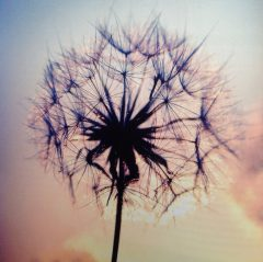 Healing-Balans